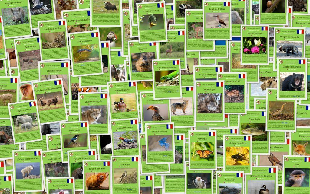 Fiches pédagogiques du dictionnaire des animaux