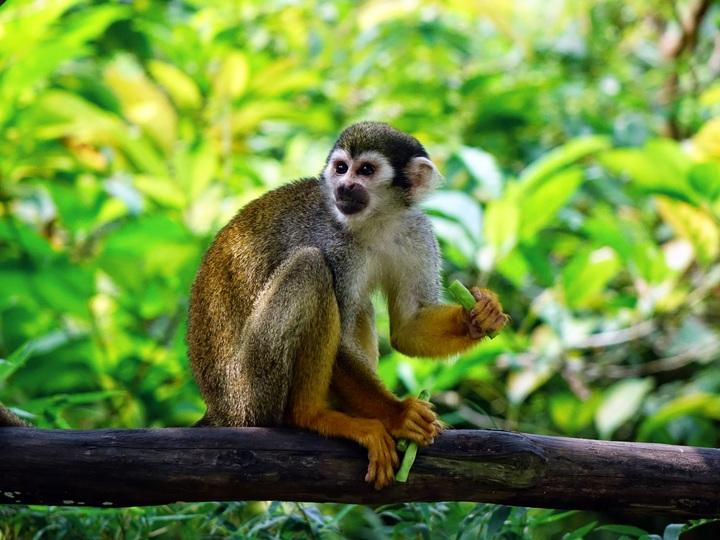 singe saimiri dans un parc animalier