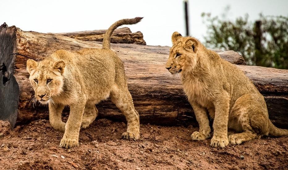 Soigneur animalier est un métier pour protéger les animaux sauvages